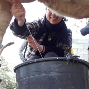 Milking in Sardinia